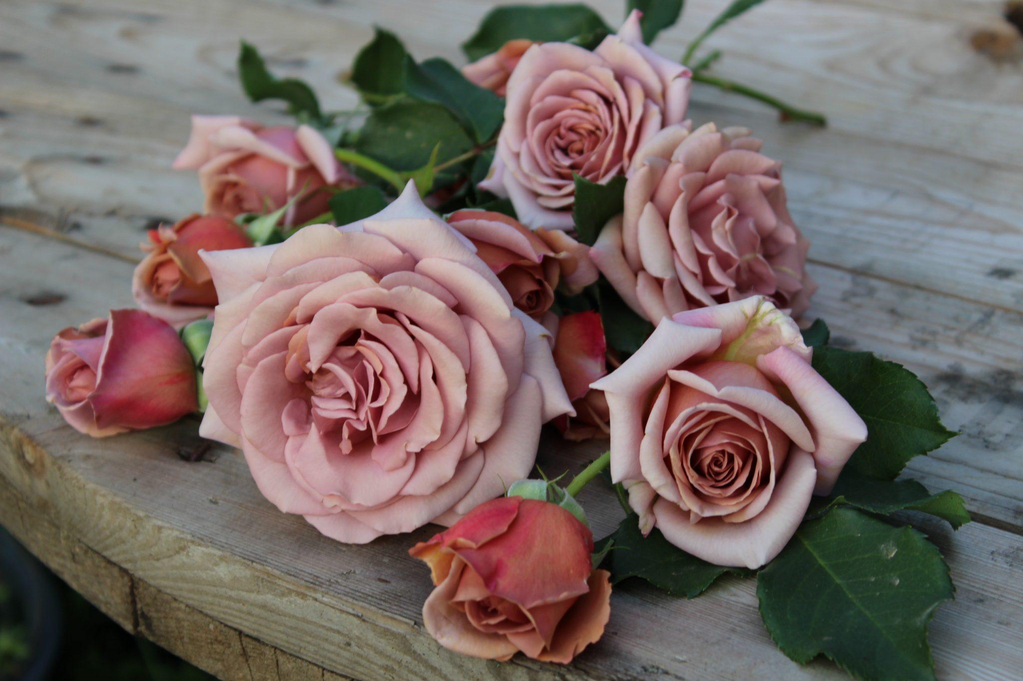 Koko loko rožės
