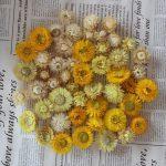 Džiovinti geltonų atspalvių šlamučiai
